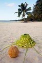 Coconut and sun hat on the sandy sea shore with straw knees out of palm leaves with couple of tourists in background of tropical Stock Photos