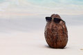 Coconut in sunglasses in sand on the beach thailand Stock Photos