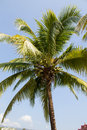 Coconut tree against the blue skies in thailand Stock Photo