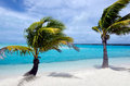 Coconut tree in aitutaki lagoon cook islands landscape of palm trees against turquoise water Stock Photos