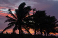 Coconut tree in aitutaki lagoon cook islands landscape of palm trees during sunset Royalty Free Stock Photo