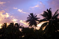 Coconut tree in aitutaki lagoon cook islands silhouette of palm trees during sunrise Stock Photos