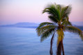 Coconut tree on background of sea and mountains sunrise Stock Photography