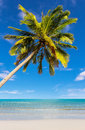 Coconut tree at beach beauty on daylight Stock Photography