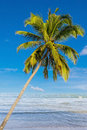Coconut tree with beach on daylight in thailand Royalty Free Stock Photo