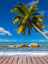 Coconut tree on the beach at summer Stock Photo
