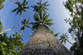Coconut tree fisheye view in tropical paradise Stock Image