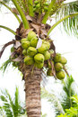 Coconut tree natural with group of young Stock Photo