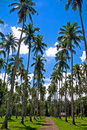 Coconut Tree Road Stock Photo