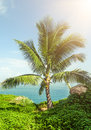 Coconut tree, sea and sunshine Royalty Free Stock Photo