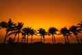Coconut tree silhouette on paradise sunset the beach Stock Images