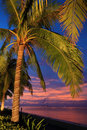 Coconut tree sunset sanya hainan china Royalty Free Stock Photography
