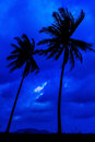 Coconut tree on twilight time Royalty Free Stock Photography