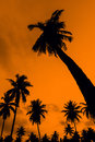 Coconut tree on twilight time in thailand Royalty Free Stock Photos