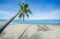 Coconut tree and two deck chair tropical luxury beach summer paradise concept Royalty Free Stock Photo