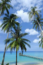 Coconut tree under blue sky Royalty Free Stock Photos