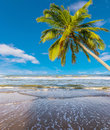 Coconut tree at white beach clean in thailand asia Stock Photos