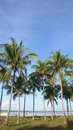 Coconut tree wiht blue sky and beach background Royalty Free Stock Photos