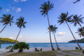 Coconut trees on a beach of angthong marine national park thailand Royalty Free Stock Image