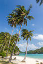 Coconut trees on a beach of angthong marine national park thailand Stock Photography