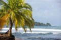 Coconut trees and big sea waves in Panama Royalty Free Stock Image