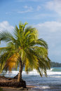 Coconut trees and big sea waves in Panama Stock Images