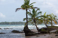 Coconut trees and big sea waves in Panama Stock Photos