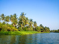 Coconut trees beside the canal in rural of thailand field Royalty Free Stock Photos