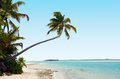 Coconut trees on deserted tropical island in aitutaki lagoon cook islands Royalty Free Stock Images