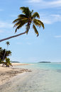 Coconut trees on deserted tropical island in aitutaki lagoon cook islands Stock Photography