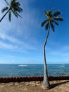 Coconut trees hang over red cylinder stones along cliff shore ne Royalty Free Stock Photo