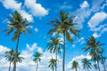 Coconut Trees With Nice Blue Sky and Clouds Royalty Free Stock Photo