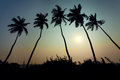 Coconut trees sunset Royalty Free Stock Photo