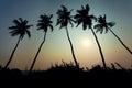 Coconut trees sunset Royalty Free Stock Photo