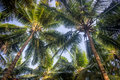Coconut trees in a tropical beach resort garden holiday summer background Royalty Free Stock Photos
