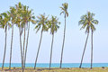 Coconut trees under blue sky at the beach of south china sea Royalty Free Stock Photo