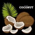 Coconut , Vector.