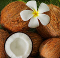 Coconuts Royalty Free Stock Photos