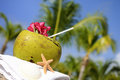 Coconuts on the beach Stock Photography
