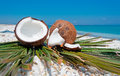Coconuts and beach palm branch by the shore Royalty Free Stock Images