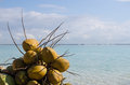 Coconuts boca chica beach dominican republic caribbean sea background Royalty Free Stock Images