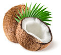 Coconuts with leaf on white background isolated Stock Images