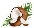 Coconuts with leaves. Royalty Free Stock Images