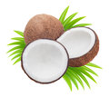 Coconuts with leaves on a white background Royalty Free Stock Image