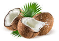 Coconuts with milk splash and leaf on white background isolated Royalty Free Stock Photo