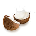 Coconuts with milk splash on white background Stock Photos