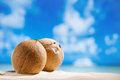 Coconuts with ocean beach and seascape shallow dof Stock Images