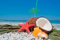 Coconuts starfish and shells by the shore Royalty Free Stock Photography