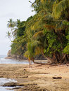 Coconuts trees on the beach Royalty Free Stock Photo