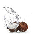 Coconuts with water splash Royalty Free Stock Image